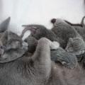 4 Pequeños recien nacidos